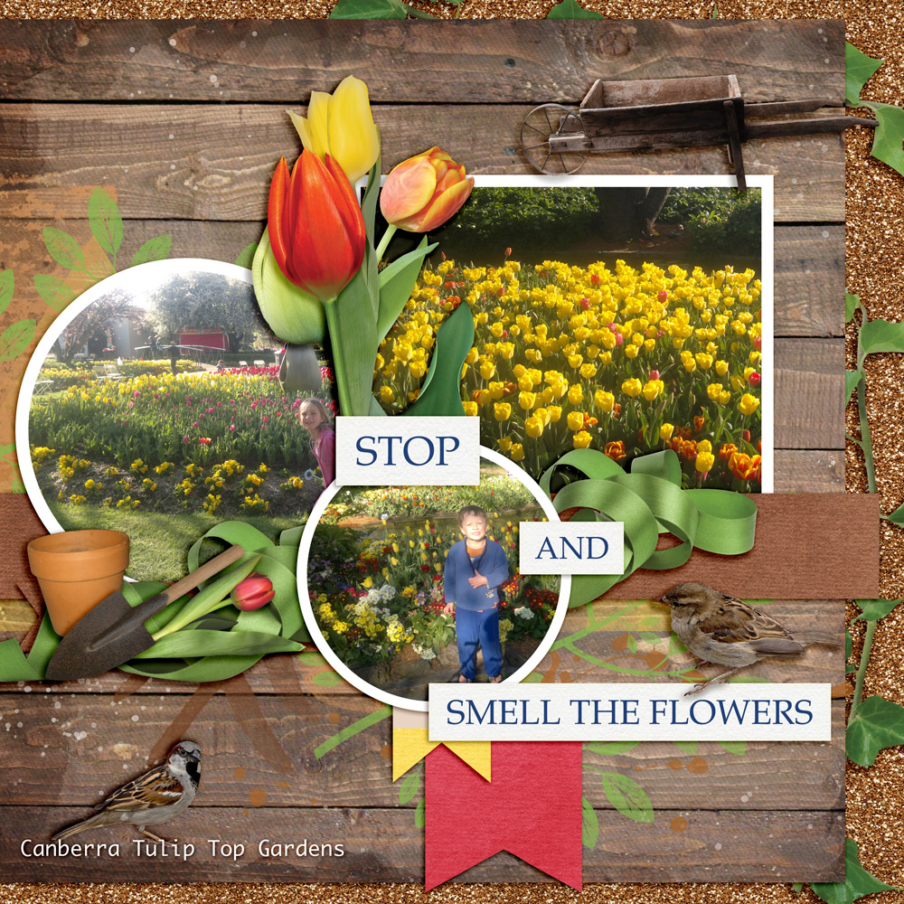 Carin Grobe Design - Tulip Time layout 1 by Denise